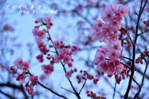 9赤坂泉_1016