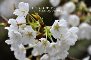 6大宝寺_1125