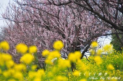 7立岩川_1158