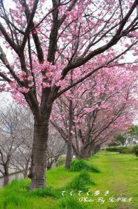 9赤坂泉_1401
