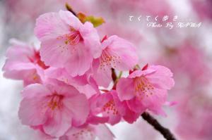 14赤坂泉_1408