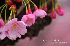 15赤坂泉_1436