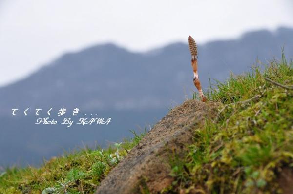 2白糸_1393