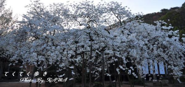 2大宝寺_1463