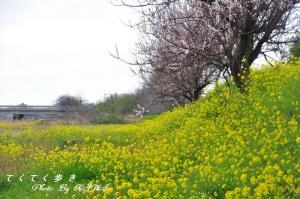 2立岩川_1141
