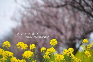 4立岩川_1157