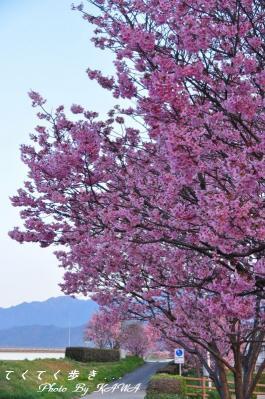 2赤坂泉_1575