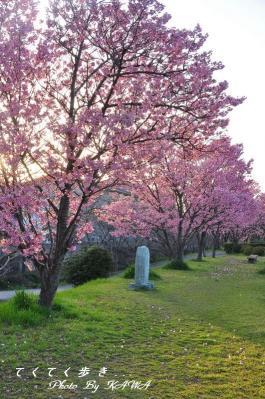 3赤坂泉_1547