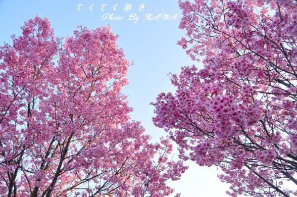 4赤坂泉_1552