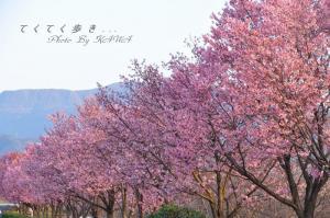 6赤坂泉_1561