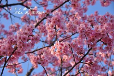 7赤坂泉_1527