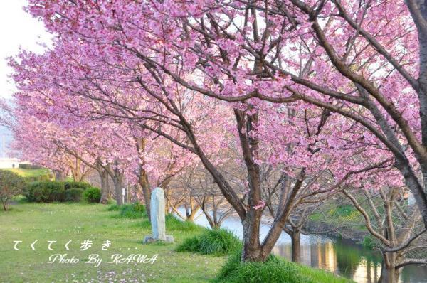 8赤坂泉_1557