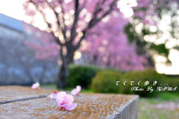 9赤坂泉_1553