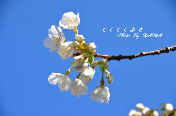 満願寺10.03.21