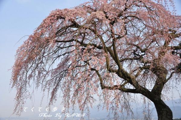 8古田_2505
