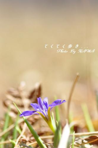 1エヒメアヤメ_2074