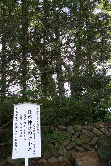 砥鹿神社 大ケヤキ ご神木 日之本元極