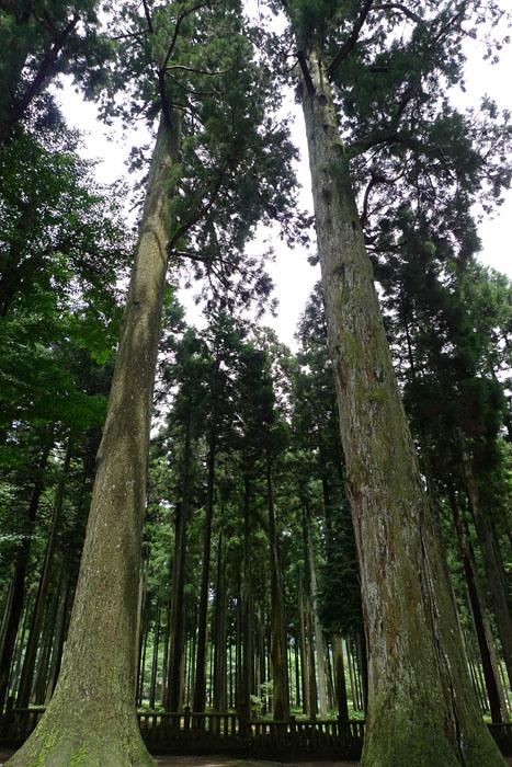 天戸間見の森 青玉神社 兵庫県