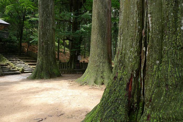 天戸間見の森 兵庫 青玉神社
