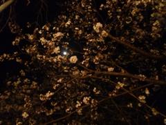 花見 002