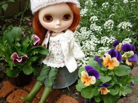 アリッサムが今頃になってから咲いている。