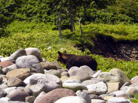 知床の熊さんです。