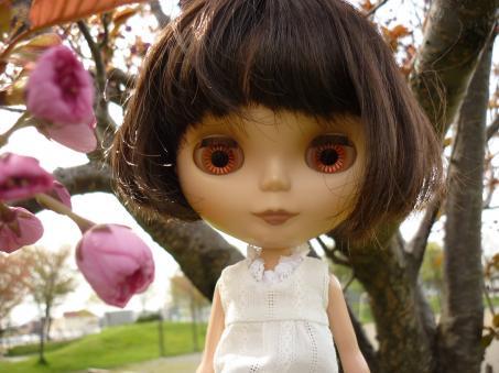ここの公園の桜は