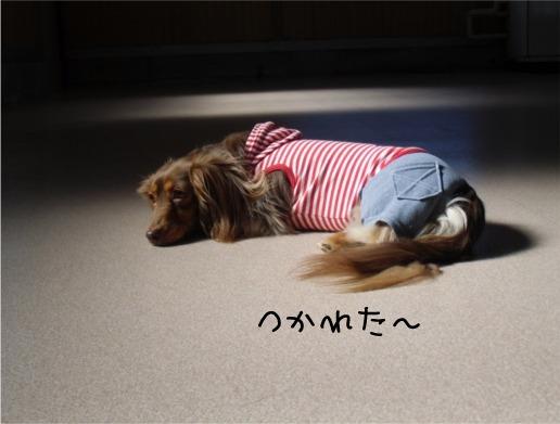 mei11_20120218100919.jpg