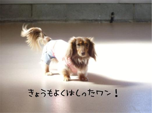 mei12_20120218100919.jpg