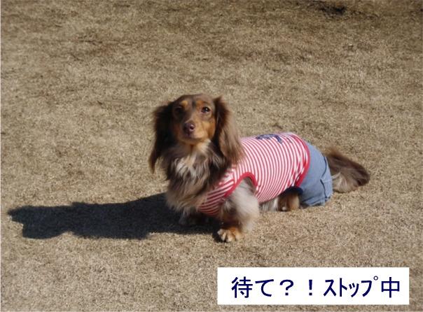 mei6_20120216112411.jpg
