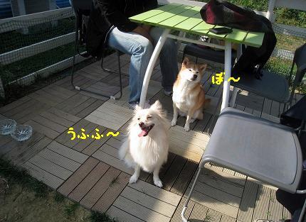 aIMG_6245.jpg