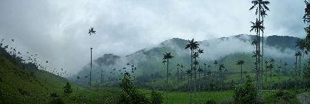 palmtreepanorama.jpg