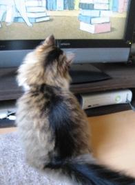 猫を探して3