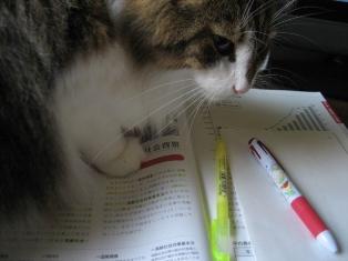 勉強中のジャック