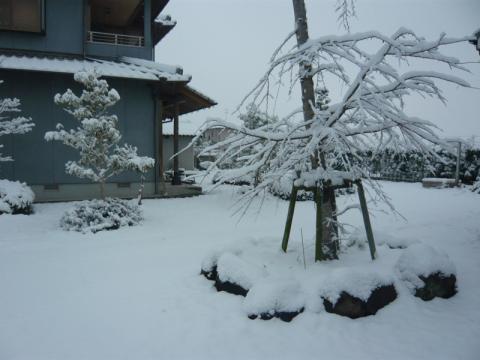 2010/01/13yuki2