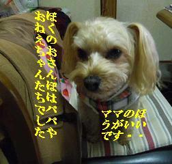 IMGP6108.jpg