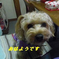 IMGP7481.jpg