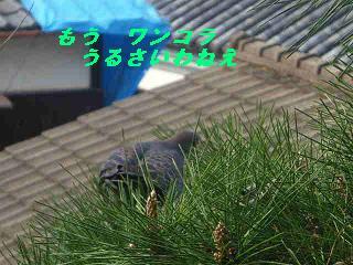 IMGP7483.jpg