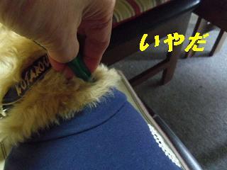 IMGP7920.jpg