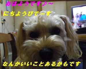IMGP7932.jpg