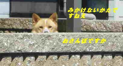 IMGP7946.jpg