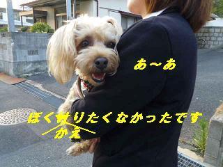 IMGP7980_20120408231028.jpg