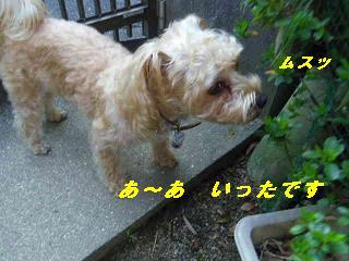 IMGP8503.jpg