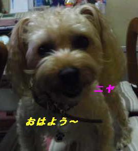 IMGP8505.jpg