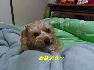 IMGP8608.jpg