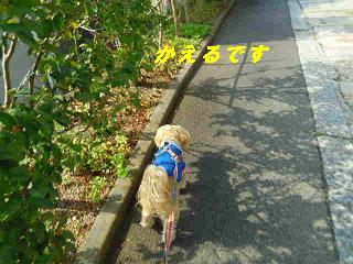 IMGP8794.jpg