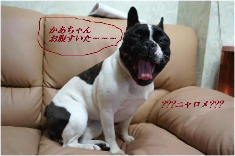001_20110101143424.jpg