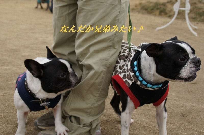 10_20110127121335.jpg