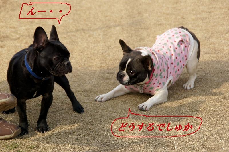 10_20110201104853.jpg