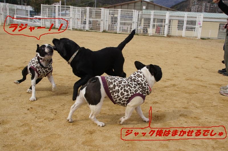 10_20110222173321.jpg